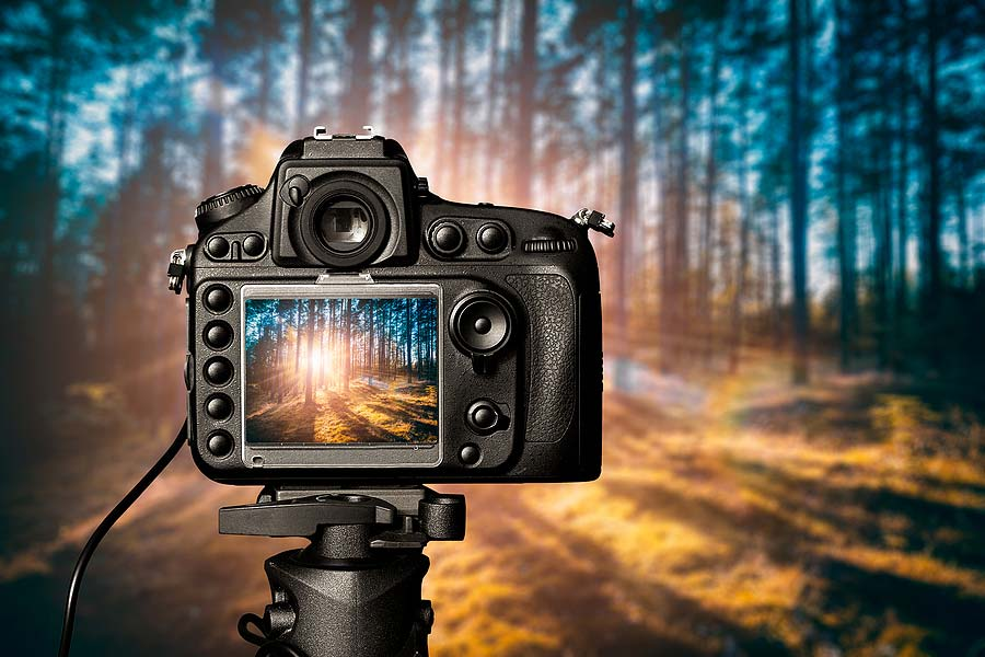 picture of an expensive digital camera taking the picture of forest which will be uploaded and sold on a digital photography marketplace